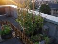 Tomates, Basilic, Menthes,...