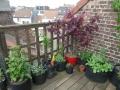 mêmes plantes + myosotis, framboisiers, menthe marocaine...