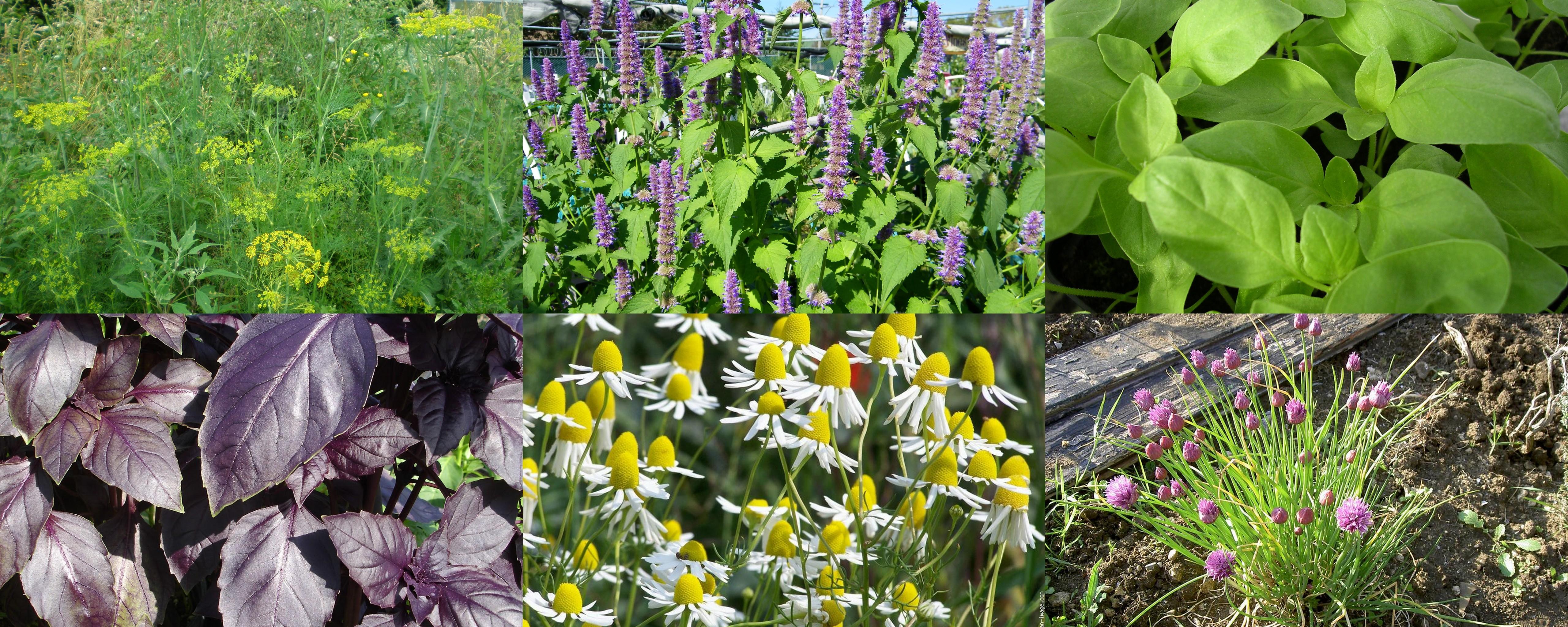 Les nouvelles plantes pour 2016 achat group de semences for Achat plante