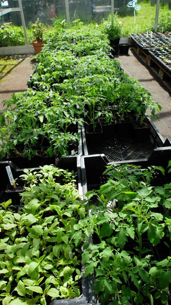 Tomates & Co / Garden Party dimanche 15 mai / Ouverture extra les dimanches